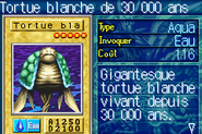 30000YearWhiteTurtle-ROD-FR-VG