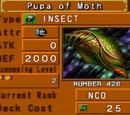 Pupa of Moth