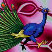 Peacock-TF04-JP-VG