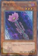 Cosmos-JP-Anime-ZX