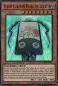 FlowerCardianZebraGrass-DRL3-FR-UR-1E