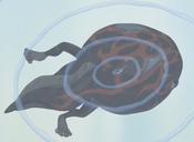 TADPOLE-JP-Anime-GX-NC-Metamorphosis