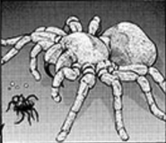 ArachnoCannibalism-EN-Manga-ZX-CA
