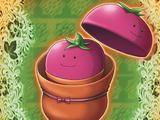 Tomato in Tomato
