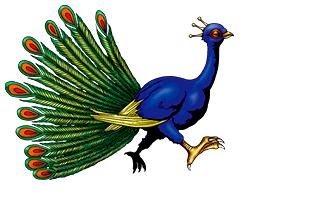 File:Peacock-DULI-EN-VG-NC.png