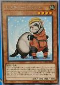 RescueFerret-COTD-JP-OP