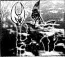 ElementalHEROOcean-JP-Manga-GX-CA