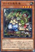 TraptrixDionaea-17TP-JP-C