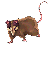 File:PlayfulPossum-DULI-EN-VG-NC.png