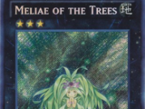 Meliae of the Trees