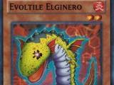 Evoltile Elginero