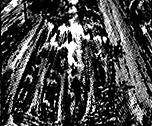 File:DeepForest-EN-Manga-R-CA.png