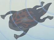 TADPOLE-JP-Anime-GX-NC-Metamorphosis-2