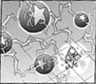 RankGazer-EN-Manga-ZX-CA