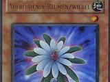 Aufblühende Blumenzwiebel