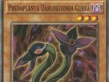Predaplanta Darlingtonia Cobra