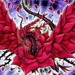 Foto dragón de la rosa negra