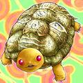Foto tortuga gora