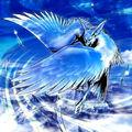 Foto pájaro sigiloso