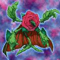 Foto rosa regeneradora