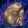 Foto des wombat
