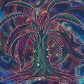 Foto predaplanta drosera calamar