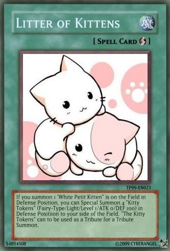 Littter of Kittens