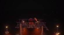 Docks jellyfish
