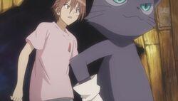 Yumeji with cats