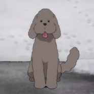 Makkachin icon