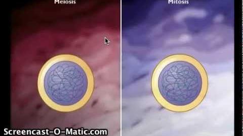 Mitose og Meiose - Opsamling