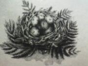 Elgort eggs