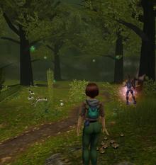 Secret enchanted forest