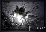 Seacliff Fairie
