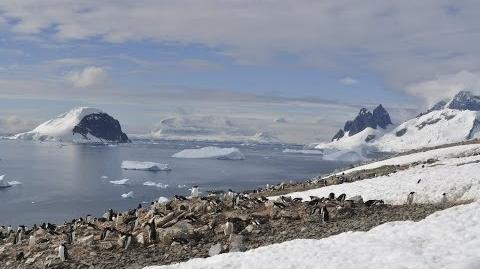 Antarctica the frozen kingdom (Antarctic Wildlife Documentary)