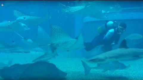 Osaka Aquarium walkthrough - Whale Shark, Rays, Sun Fish, Squids, Penguins..
