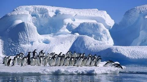 Antarctica Cruises Ship (HD)