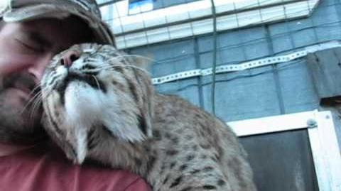 Benji the bobcat being his lovable self