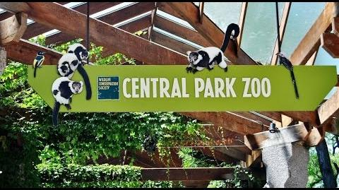 Views From The Zoo Ep 2 Central Park Zoo
