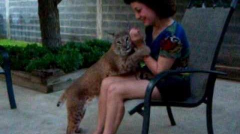 Unbelievable Bobcat