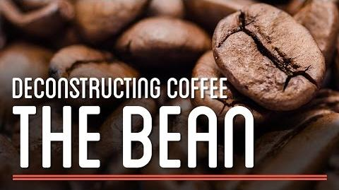 The Bean - Deconstructing Coffee How To Make Everything Coffee
