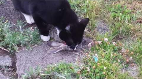 Kitty eats bunnys head fast