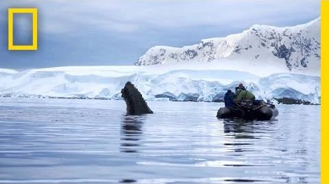 Trailer Continent 7 Antarctica-0