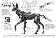Big five african wild dog breakdown by crazyasian1-d6mbl7f