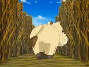 Ponygon perdido