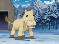 Ponygon