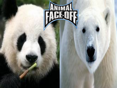 Animal Face-Off 1 Polar Bear vs Panda Bear