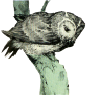 Owl Artwork 4 (Link's Awakening)