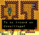 Coquillage 13