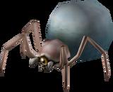 Larva di Gohma